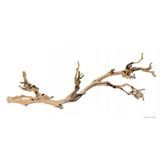 Pied de Vigne Sablé grand modèle - 60 cm