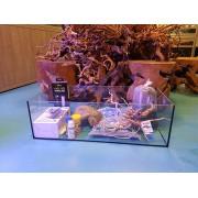 Kit Premium+ Axolotl