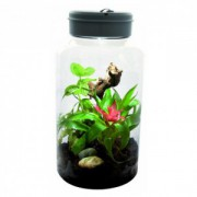 Bocal plastique insectarium
