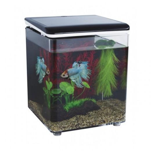 Kit mini aquarium betta 8 litres noir superfish for Betta fish tank kit