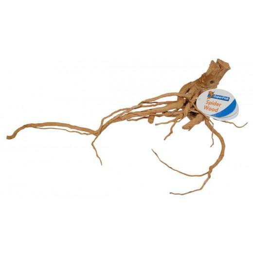racine araignee small (20-30cm)