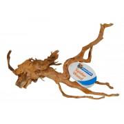 racine araignee large (40-50cm)