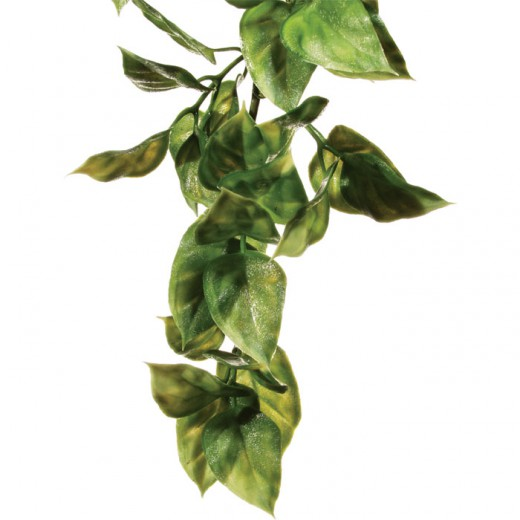 Plante Amapallo Small
