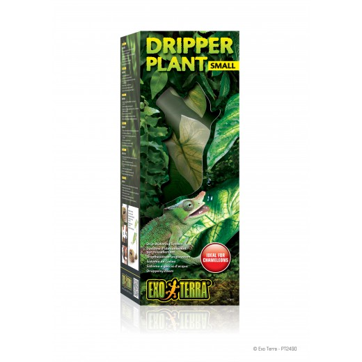 Water dripper plant 2 feuilles Small
