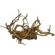 Racine de vigne rouge rare 30-42 cm