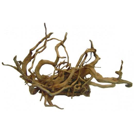 Racine de vigne rouge 30-42 cm