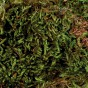 Mousse pour terrariums - 200 g