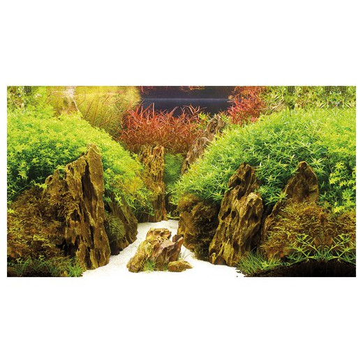 Poster prédécoupé canyon/woodland 120x50 cm