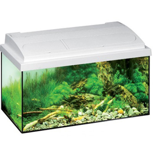 Aquarium équipé Mp aquastar - 54L - Blanc
