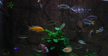 poissons-d'eau-douce
