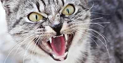 Le chat crache
