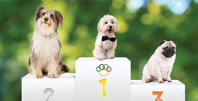 Les chiens de concours