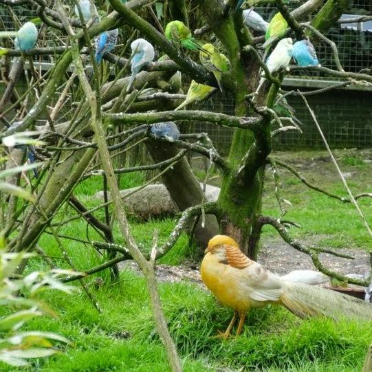 Quelle taille de cage pour une perruche envies animales for Zoo exterieur