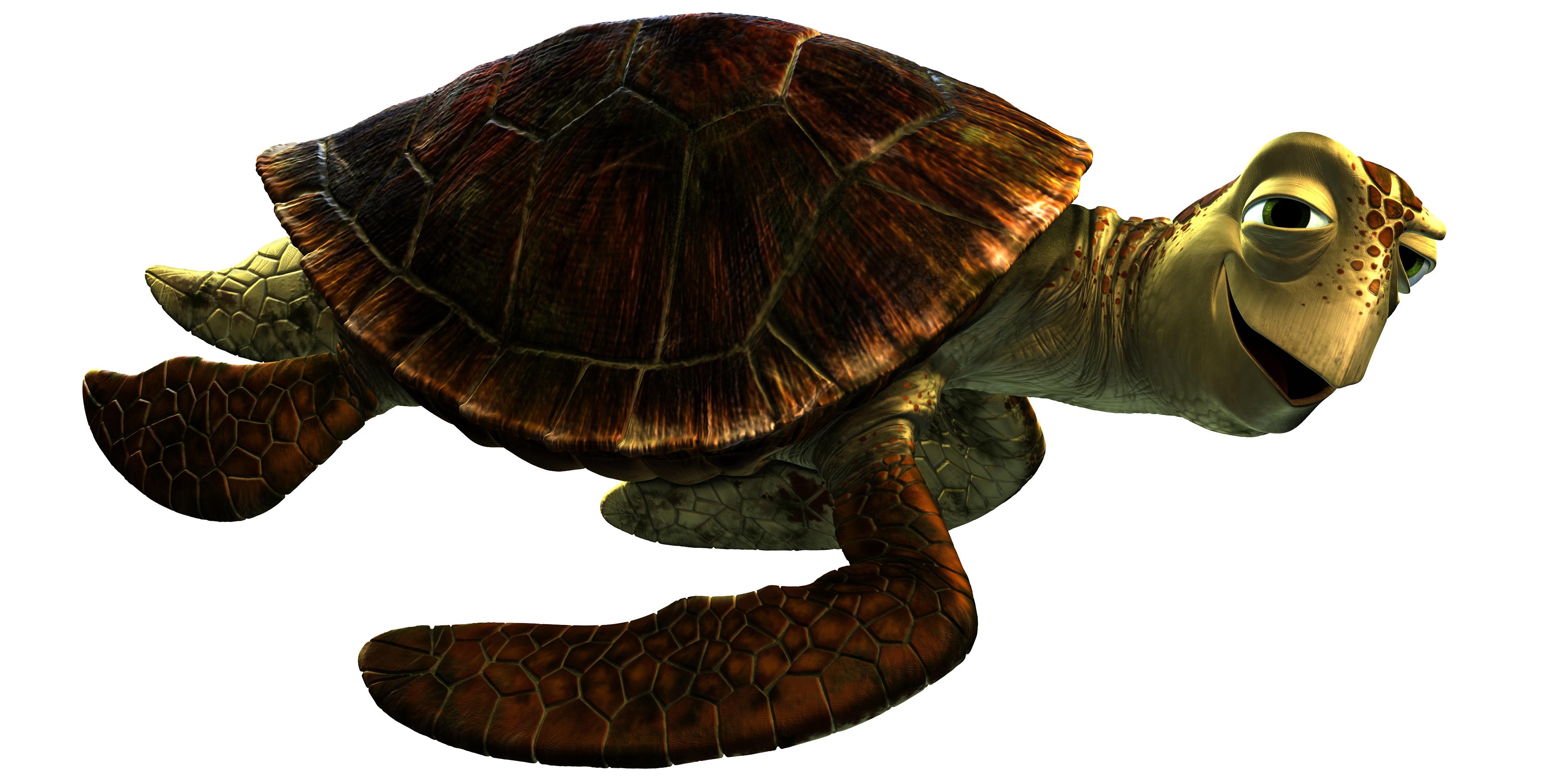 Combien de temps vit une tortue aquatique envies animales - Images tortue ...