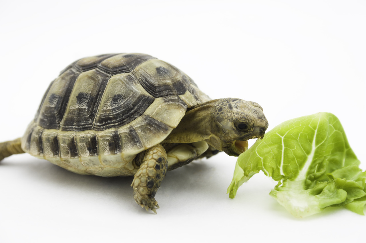 Quelle alimentation pour une tortue de terre envies - Images tortue ...