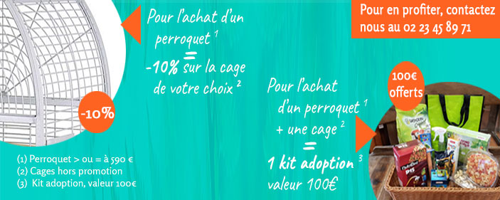 offre adoption perroquet